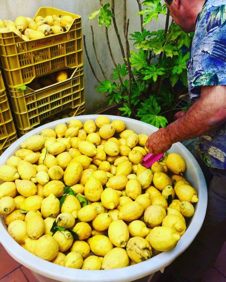 citroenen limoni tramonti salerno travel amalfi coast amalfi kust lemons