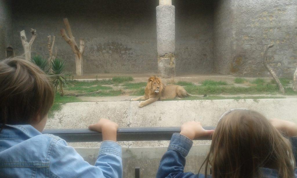 dierentuin, zoo, napels, naples, napoli, kids, kinderen, salerno, salerno travel, kindvriendelijk napels