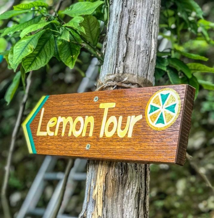 lemon tour amalfi