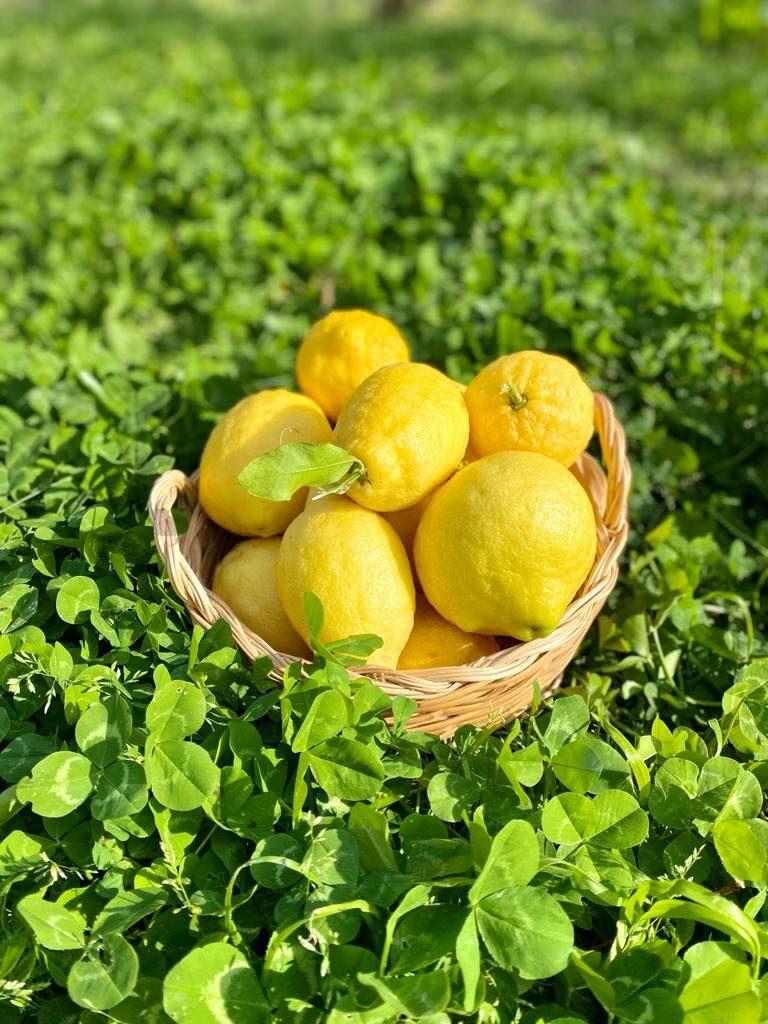 limoncello recept citroenen